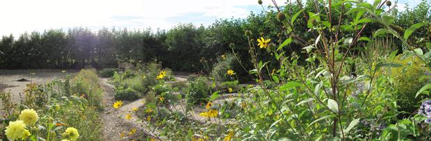 Je helpt ons enorm met je financiële bijdrage. Met het geld kunnen wij planten en struiken voor de tuin, regentonnen, zand, aarde en andere materialen aanschaffen.
