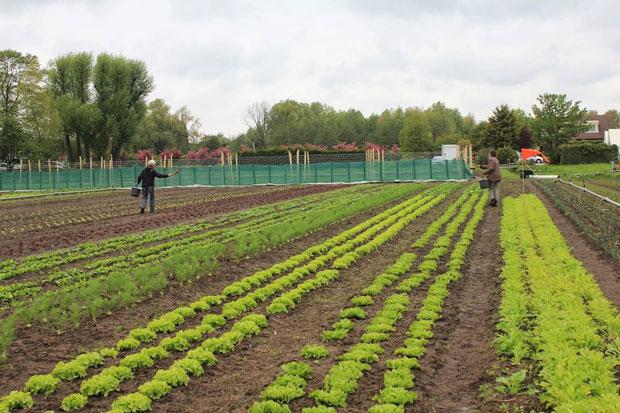 Biologisch-Dynamische-Landbouw, het kan in Haarlem en je kunt zelf meedoen.