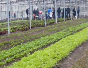 15 en 19 februari, Eerste oogst in de Kweektuinkas. De Nieuwe Akker